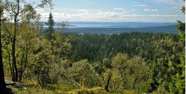 MER ENN GRAN. Utpreget blandingsskog fra Granbergets nedsikt på Barlindåsen, som på sin side ser ut til å ha mange grantrær. Foto: MARIANNE REUSCH