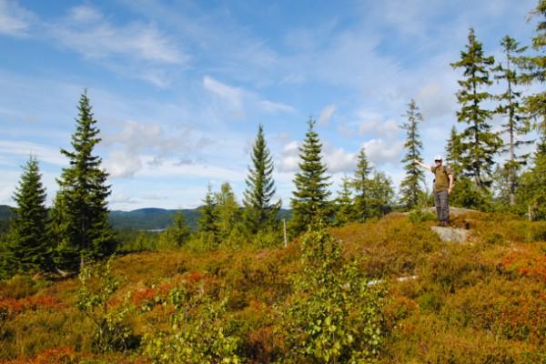 En vakker dag på den elegante Almedalshøgdas nordvestpynt, august 2013.