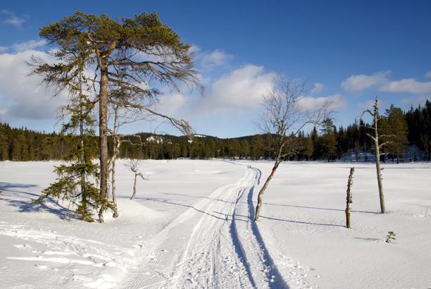 Møkkalitjern2011