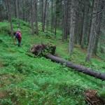 En højdare i Østmarka