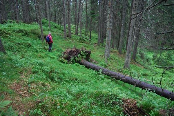 DYPE SKOGER. På vei gjennom reservert natur til Barlinderåsens topp. Foto: VESLE-BERNHARD