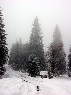 Midtskoggrana2.mm