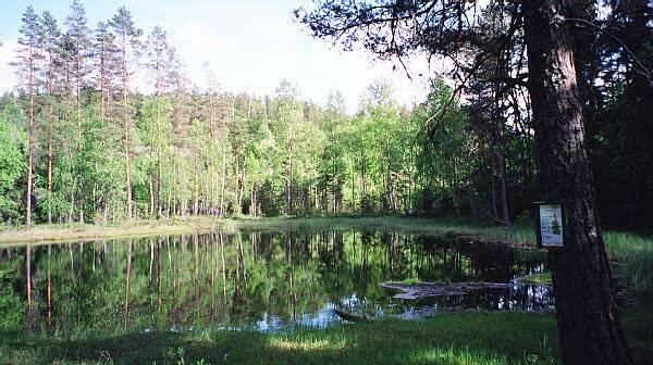 ELGENS VANNHULL? Det vakre Elgtjern i Sørmarka. Foto: STEIN BOTILSRUD