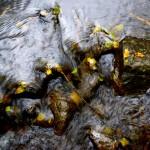 Mellom kolera og rent vann