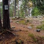 Et krigsminne i hundremeterskogen